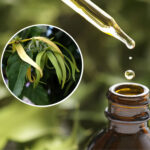 Óleo Essencial de Ylang Ylang Completo (Totum) Biológico
